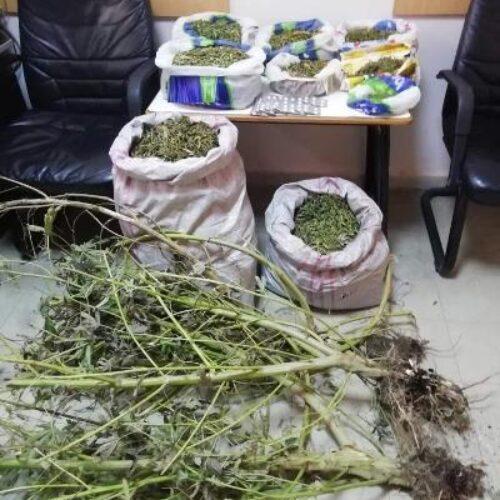 Συνελήφθη 45χρονος για κατοχή και καλλιέργεια κάνναβης
