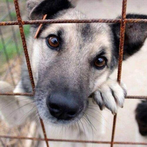 Δήμος Βέροιας: Ολοκληρώθηκε επιτυχώς το πρόγραμμα εθελοντικών στειρώσεων αδέσποτων ζώων συντροφιάς
