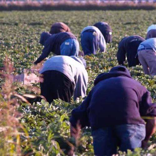 Κοινοβουλευτική Ερώτηση από τον Τάσο Μπαρτζώκα για το δυσμενές καθεστώς των εργατών γης