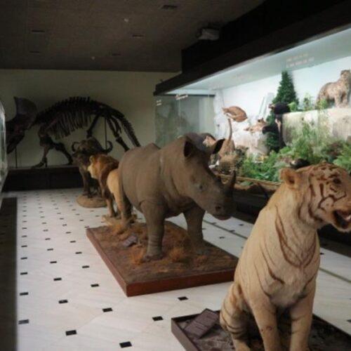 Μουσείο Γουλανδρή Φυσικής Ιστορίας – Ένας εντυπωσιακός εκθεσιακός χώρος έρευνας και απόκτησης περιβαλλοντικής συνείδησης