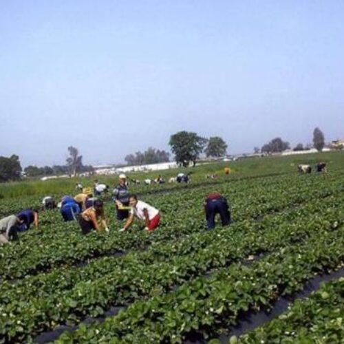 Ο Τάσος Μπαρτζώκας για το ζήτημα της έλλειψης εργατικών χεριών στις αγροτικές καλλιέργειες