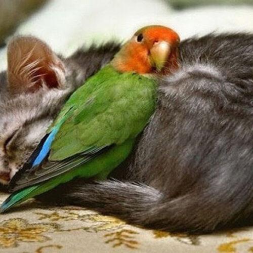 """""""Τα ζώα είναι ό,τι μας απέμεινε από τον παράδεισο"""" γράφει ο Νίκος Δήμου"""