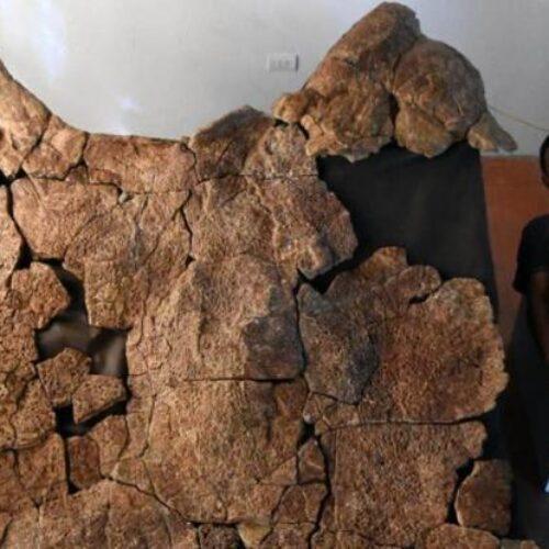N. Αμερική: Βρέθηκαν απολιθώματα γιγάντιας χελώνας σε μέγεθος... αυτοκινήτου! (photo/video)