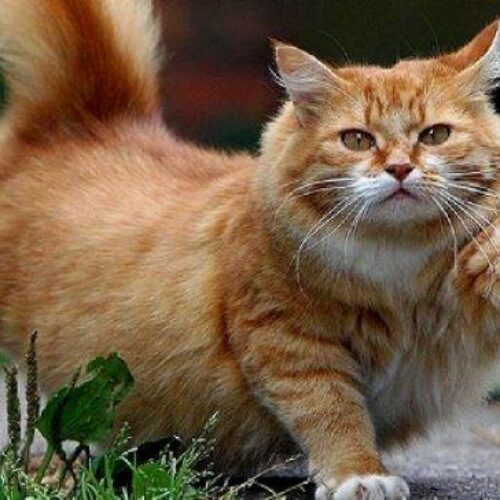 Γαλλία: Μια γάτα... υποψήφια στις δημοτικές εκλογές