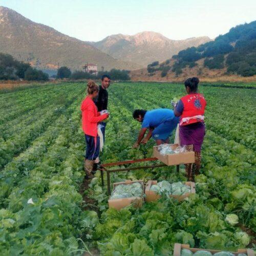 Ο Ενιαίος Σύλλογος Αγροτών Νάουσας για τη μετάκληση αλλοδαπών εργατών γης