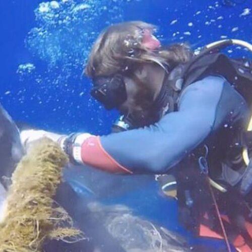Εντυπωσιακό υποβρύχιο βίντεο: Δύτες απελευθερώνουν τεράστιο φαλαινοκαρχαρία από  χοντρό κάβο που είχε μπλεχτεί