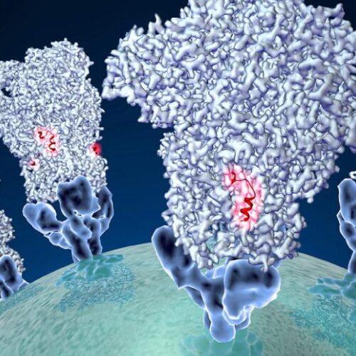 """Κορωνοϊός - Εφιαλτική εκτίμηση κορυφαίου επιδημιολόγου: """"Ο ιός θα μολύνει το 40% -70% του παγκόσμιου πληθυσμού"""""""