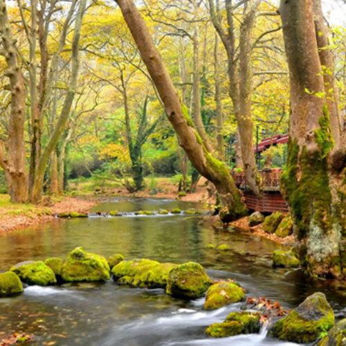 Δήμος Νάουσας: Κλείνουν το Άλσος του Αγίου Νικολάου και το Δημοτικό Πάρκο
