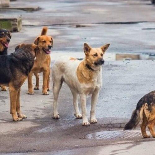 Θεσσαλονίκη: Νέο κρούσμα με επίθεση αγέλης σκύλων και σοβαρό τραυματισμό νεαρού άνδρα