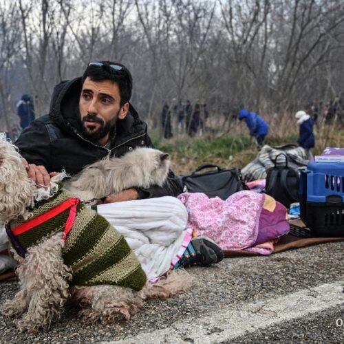 Πέρσης (γάτος) πρόσφυγας  στον Έβρο αναμένει να περάσει τα σύνορα
