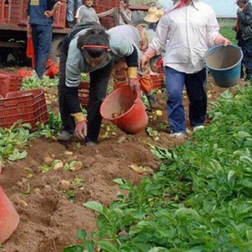 """Το ΚΚΕ για τη γυναίκα αγρότισσα με αφορμή την 8η Μάρτη """"Παγκόσμια ημέρα της Γυναίκας"""""""