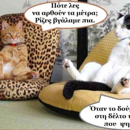 """Τα ζώα ομιλούν: """"Γάτες σε καραντίνα: ελιτόγατες και αλητόγατες"""" - Ελένη Βασιλείου"""