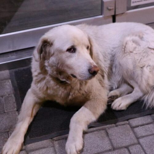 Κορονοϊός - Δήμος Βέροιας: Έκκληση στα φιλοζωικά σωματεία για την από κοινού φροντίδα των αδέσποτων ζώων