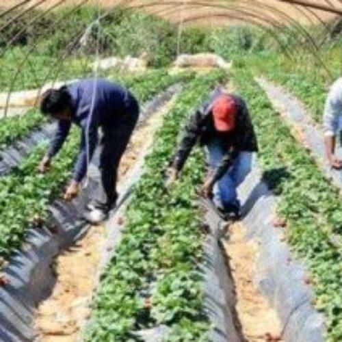 Δήμος Βέροιας: Ξεκίνησε η συγκέντρωση αιτήσεων εποχικών και εργατών γης