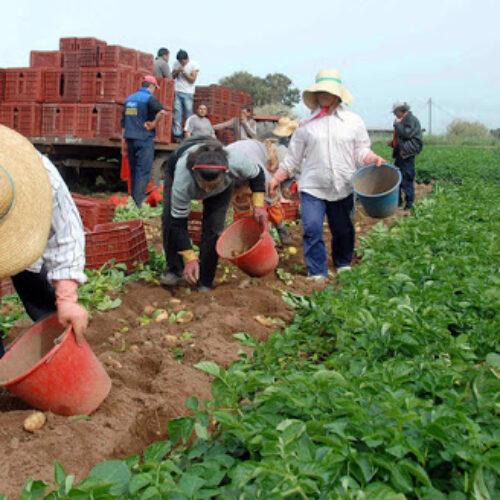 """Φρ. Καρασαρλίδου: """"Χαριστική"""" βολή για τις αγροτικές καλλιέργειες, η έλλειψη εργατικών χεριών, εάν δεν δοθεί άμεσα λύση"""