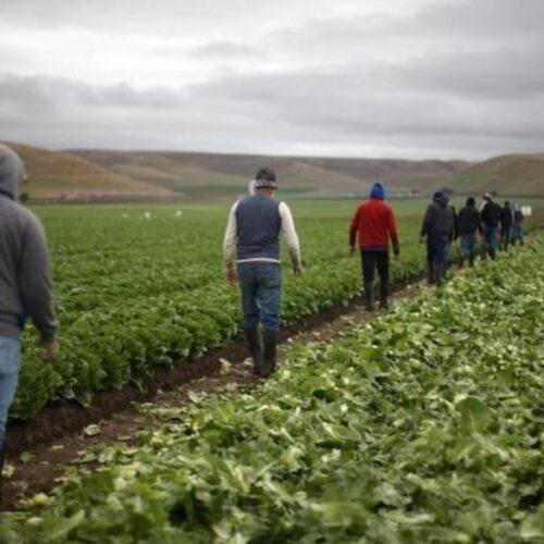 """Λάζαρος Τσαβδαρίδης: """"Ανάγκη εκκαθάρισης ασφαλιστικών εισφορών εργατών γης – υποψήφιων συνταξιούχων"""""""