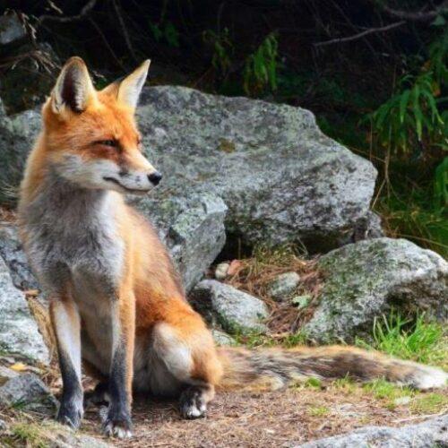 Π.Ε. Ημαθίας: Ρίψη εμβολίων - δολωμάτων κατά της λύσσας των άγριων ζώων