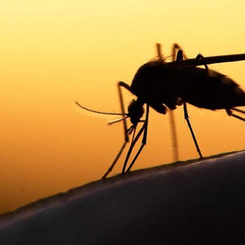 Π.Ε. Ημαθίας: «μέτρα προστασίας απο τα κουνούπια»