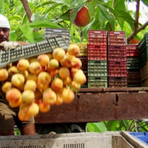Η ΕΔΟΠ για την πρόσκληση εργατών γης από την Αλβανία