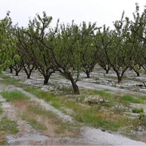 """Φρόσω Καρασαρλίδου: """"Φωνή βοώντος"""", από ΕΛΓΑ και Κυβέρνηση για ζημιές κι αποζημιώσεις αγροτών"""