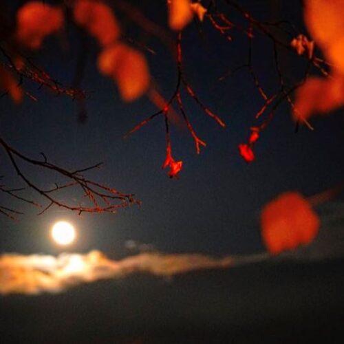 Γιώργος Πολάκης «Ήρθε και το φεγγάρι»