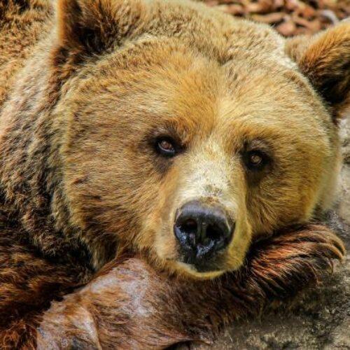 Πάρτι έκανε οικογένεια αρκούδων σε κτήμα του Μετσόβου! Κατανάλωσαν όλο το κρασί και το τσίπουρο που ήταν στην αποθήκη (photos/video)