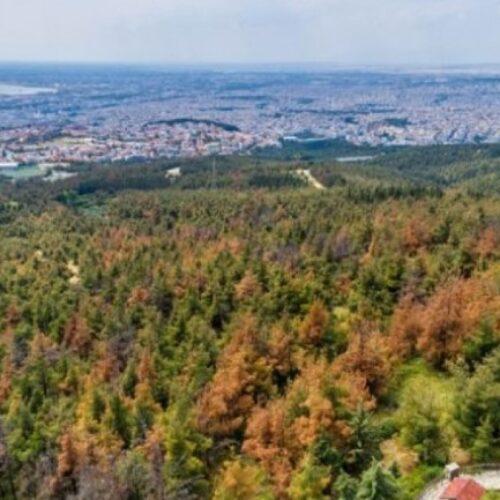 Το ΚΚΕ για την κατάσταση στο δάσος του Σέιχ Σου και την ανάγκη για άμεση λήψη μέτρων προστασίας και αναβάθμισης