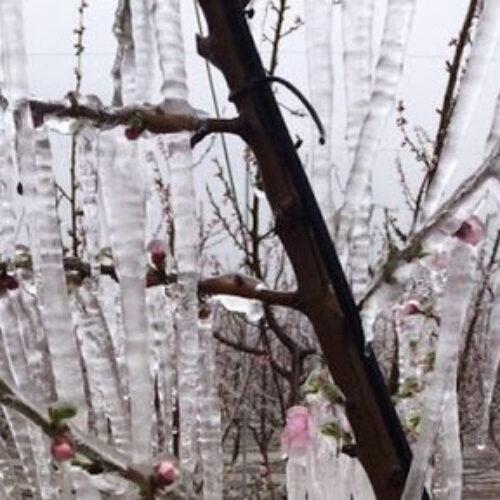 Δήμος Βέροιας: Προθεσμία υποβολής οριστικών δηλώσεων ζημιάς από παγετό