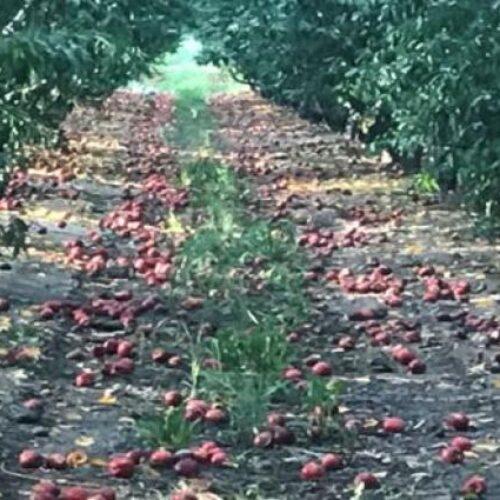 Ημαθία: Δήλωση Φρόσως Καρασαρλίδου για τις ζημιές στις καλλιέργειες