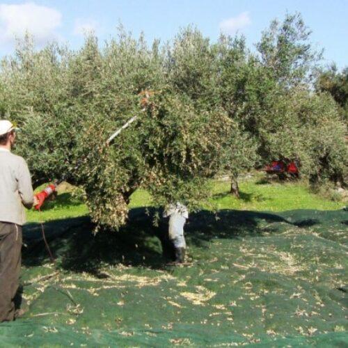 Πρόσκληση της Περιφερειακής Ενότητας Χαλκιδικής  για Εργάτες Γης