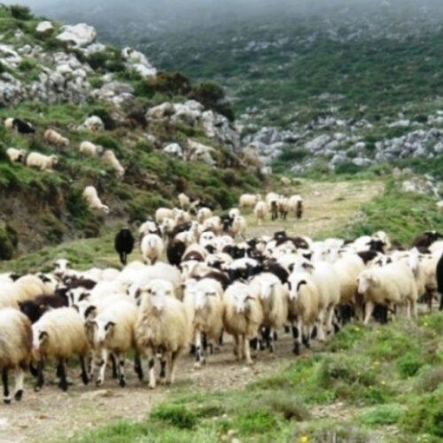Π.Ε. Ημαθίας: Ενημέρωση κτηνοτρόφων και μέτρα προφύλαξης για τον Καταρροϊκό Πυρετό