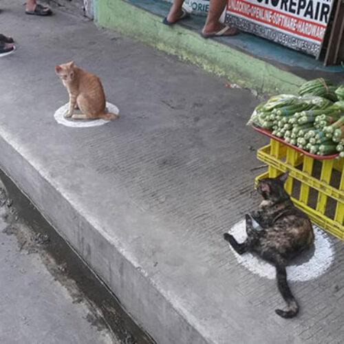 Κορωνοϊός: Έξυπνες γάτες τηρούν το πρωτόκολλο της φυσικής απόστασης