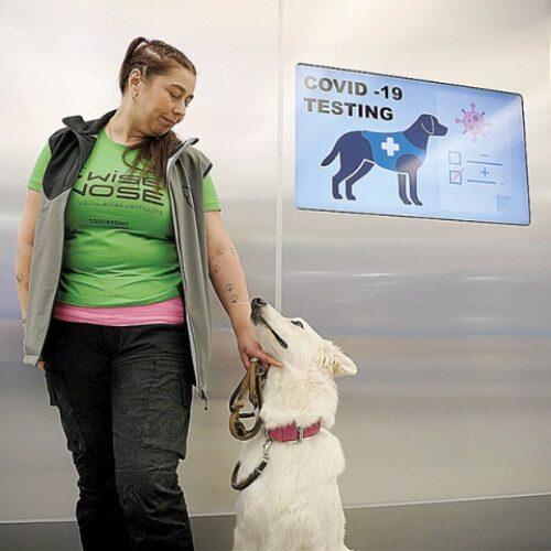 Ελσίνκι: Σκύλοι έχουν εκπαιδευθεί ώστε να αναγνωρίζουν την οσμή του κορωνοϊού