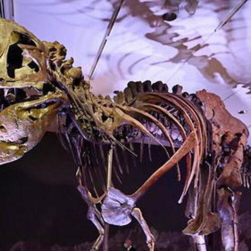 """""""Πωλείται Δεινόσαυρος!"""" γράφει ο Προκόπης Κωφός"""