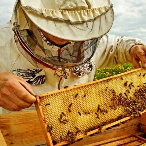 Η Π.Ε. Ημαθίας για το πρόγραμμα βελτίωσης των συνθηκών των προϊόντων μελισσοκομίας για το 2021