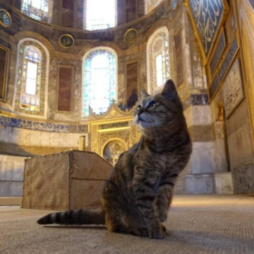 Πέθανε η Γκλι, η διάσημη «γάτα της Αγίας Σοφίας» (photo)