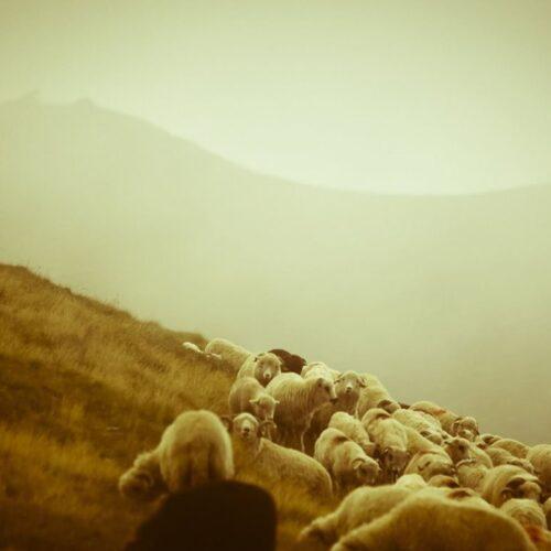 """""""Τάκης Ζαρκάδας, ένας κτηνοτρόφος… φιλόσοφος!"""" - Πορτρέτο του από τη Δημόσια Κεντρική Βιβλιοθήκη της Βέροιας"""