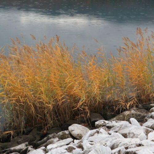 Ο γύρος της Λίμνης του Αλιάκμονα με ψιλόβροχο