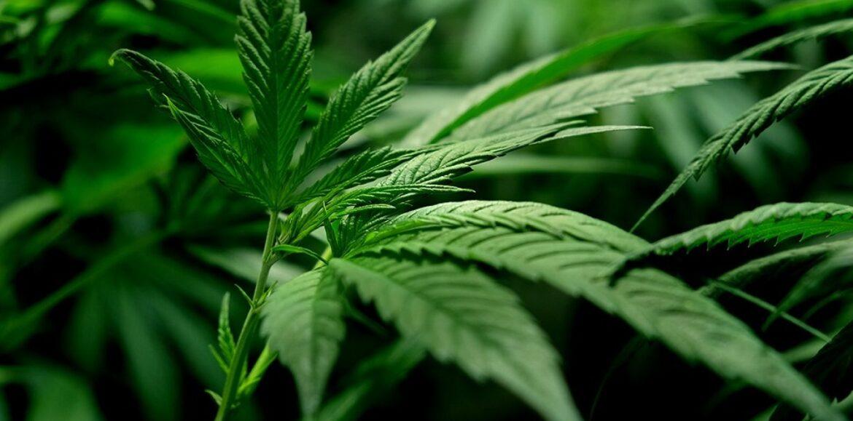 """Ο ΟΗΕ αφαίρεσε την κάνναβη από τη λίστα με τα """"επικίνδυνα ναρκωτικά"""""""