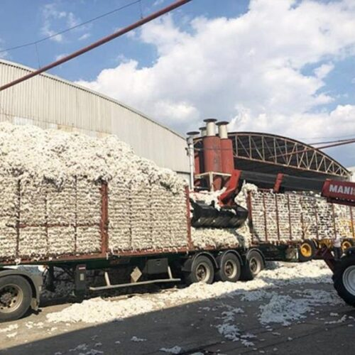 Επιτροπή Αγώνα Αγροτοκτηνοτρόφων Αλεξάνδρειας: Υπεύθυνη για τις εξευτελιστικές τιμές στο βαμβάκι η Κυβέρνηση και η πολιτική της ΕΕ που η ίδια εφαρμόζει