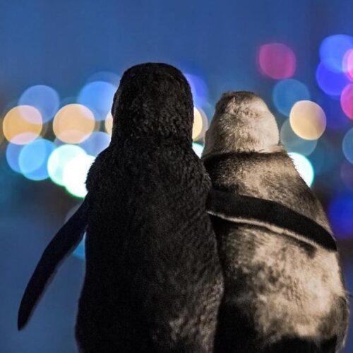 Βραβείο φωτογραφίας: Δύο χήροι πιγκουίνοι που αγκαλιάζονται! - Viral έγινε το video
