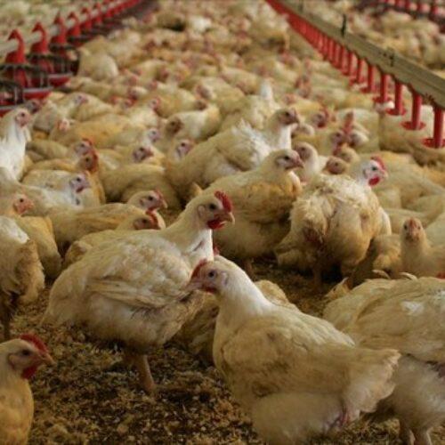 Η Π.Ε. Ημαθίας για τη γρίπη των πτηνών