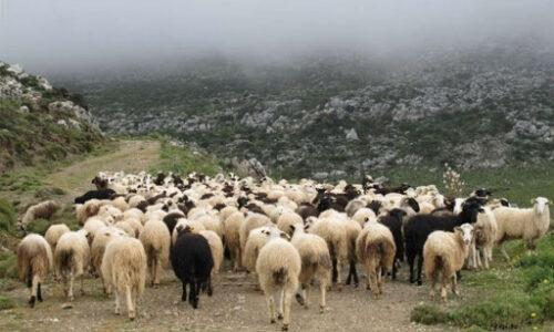 Π.Ε. Ημαθίας: Ενημέρωση κτηνοτρόφων του Νομού για την κατανομή των βοσκήσιμων γαιών 2020