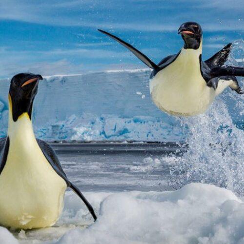Ο διάσημος φωτογράφος του National Geographic Paul Nicklen αποτυπώνει την αγάπη του για τις πολικές περιοχές