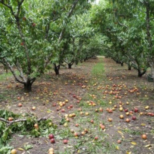 Αγροτικός Σύλλογος Ημαθίας: Όχι στην ανισονομία – Άμεση καταβολή Deminimis  και ενισχύσεων λόγω covid 19