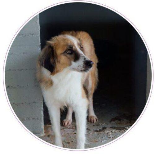 Δήμος Βέροιας: Υιοθέτησε ένα αδέσποτο σκυλάκι με «ένα κλικ»