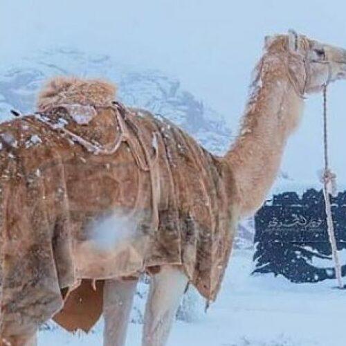 Τρελάθηκε ο καιρός! - Χιόνια στη Σαχάρα και Σαουδική Αραβία, στους -2°C ο υδράργυρος!