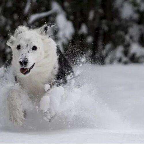Ελβετία: Σκύλοι έσωσαν ζευγάρι που καταπλακώθηκε από χιονοστιβάδα από βέβαιο θάνατο