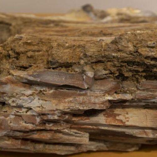 Απολιθωμένοι κορμοί δέντρων ηλικίας 18.000.000 ετών βρέθηκαν στη Λέσβο