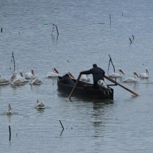 «Αγγελοπουλικές» εικόνες στη λίμνη Κερκίνη - Φωτογραφίες ψαράδων και πουλιών στο υποβλητικό βαλκανικό τοπίο